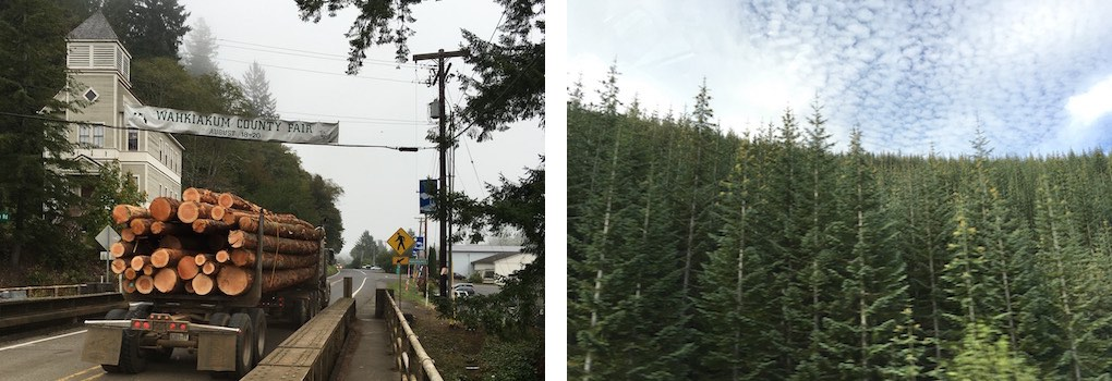 logging-vs-reforestation