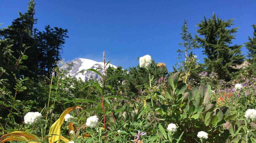 Wildflowers & Mtn