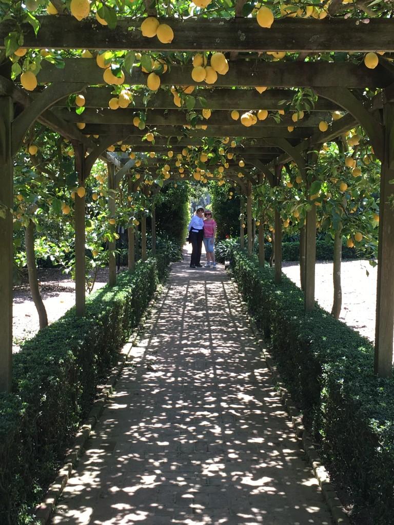 FW-Lotusland Arbor with Lemon Trees