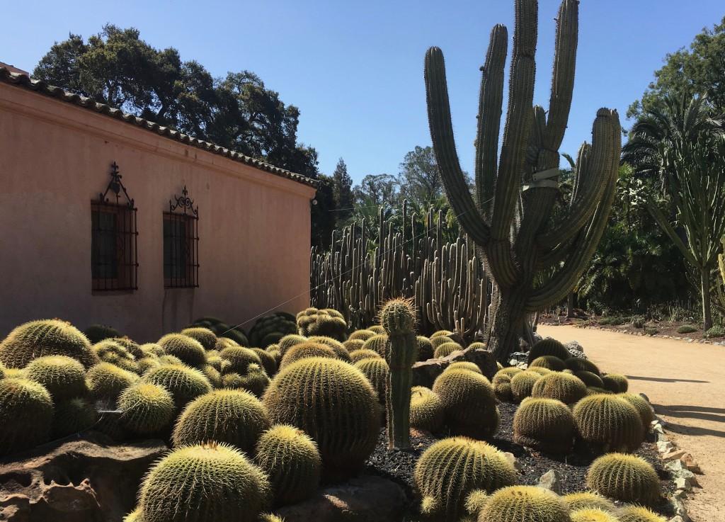 FW-Lotusland Cactus