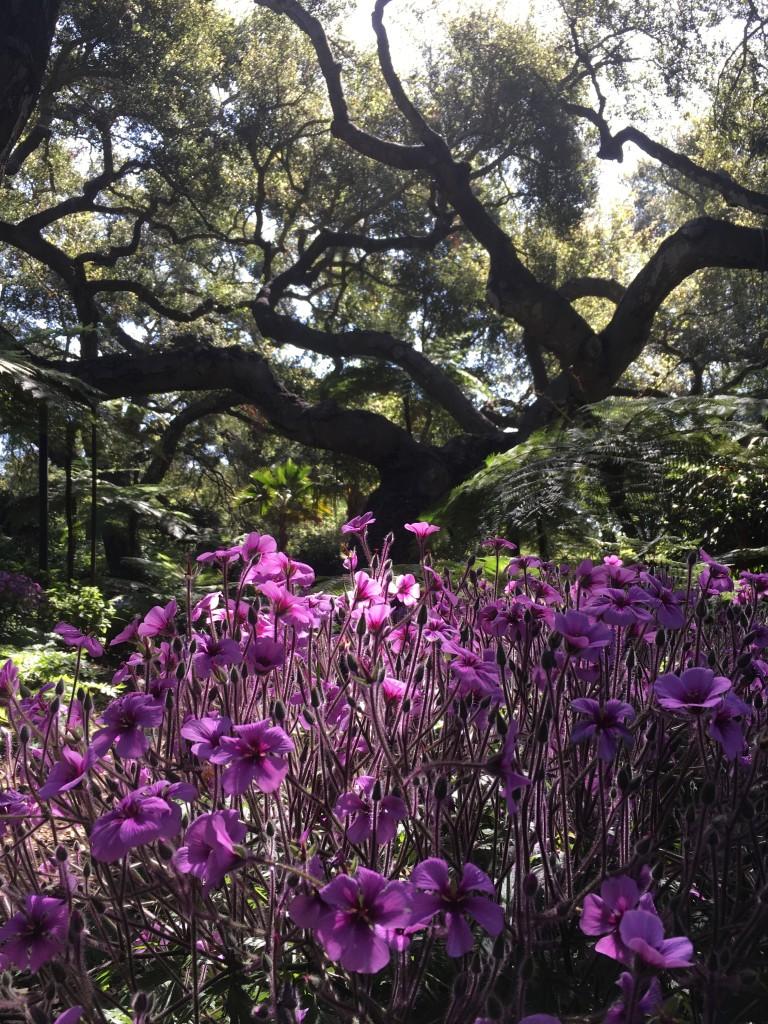 FW-Lotusland-Purple flowers & tree